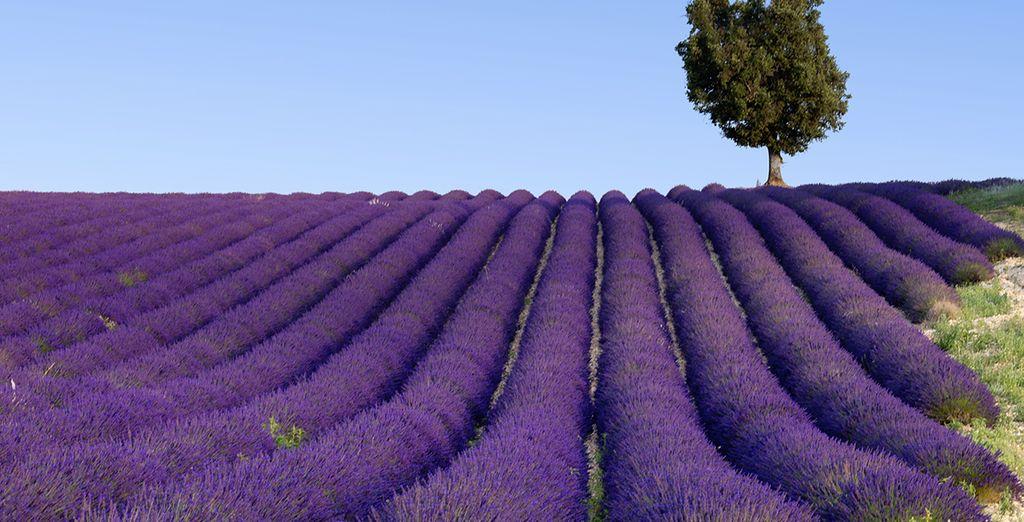 Explore the impressive beauty of Provence...