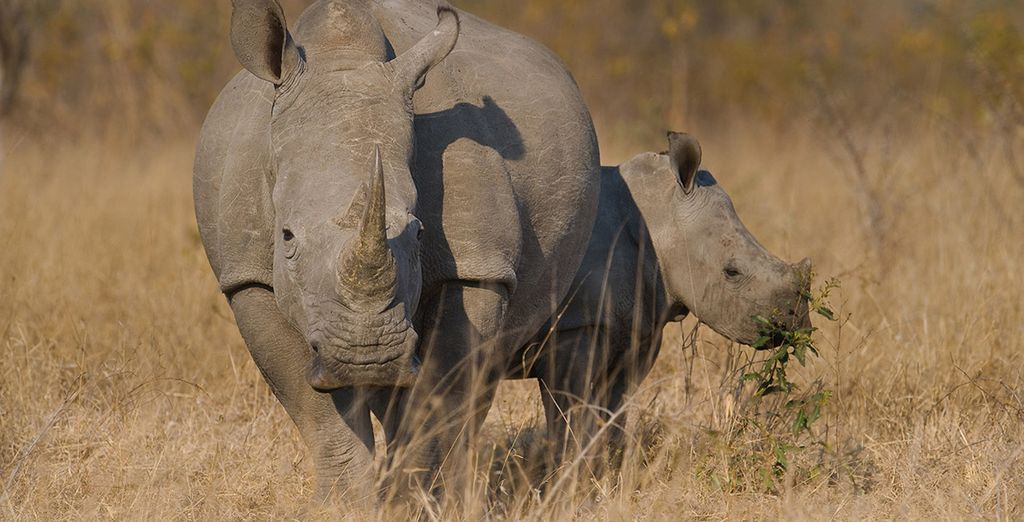 And of course the eponymous rhino