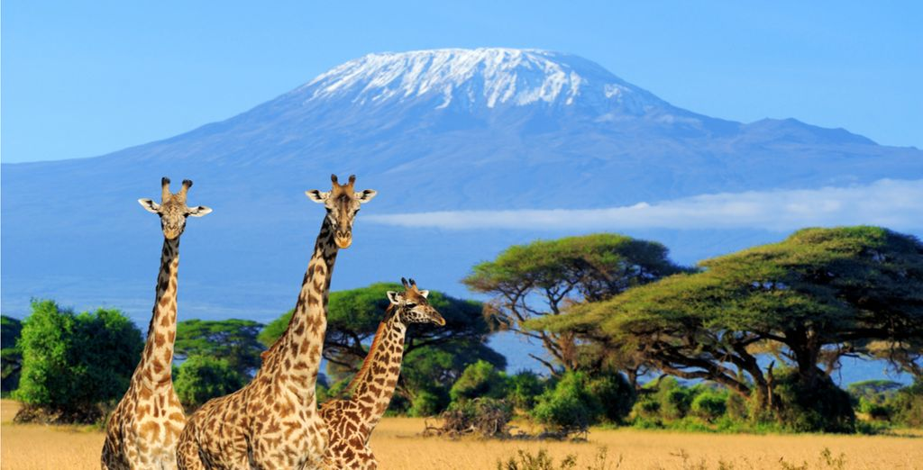 Enjoy daily game drives in the some of Kenya's inspiring National Parks