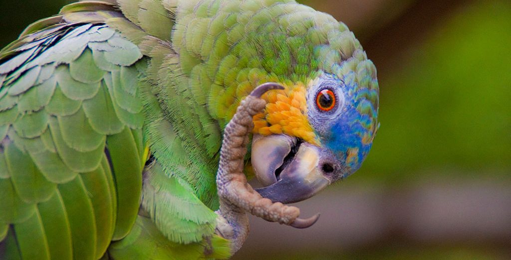 Discover South America's wildlife