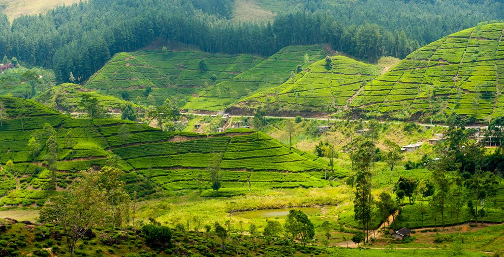 A stunning island of lush tea plantations...