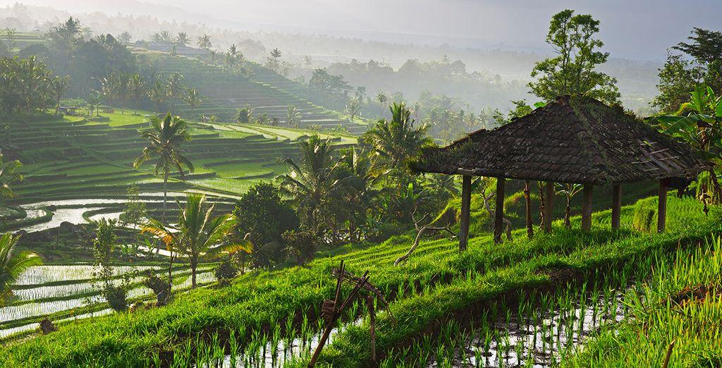 Explore the island's serene rice terraces