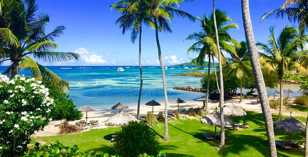 Paradise beckons...