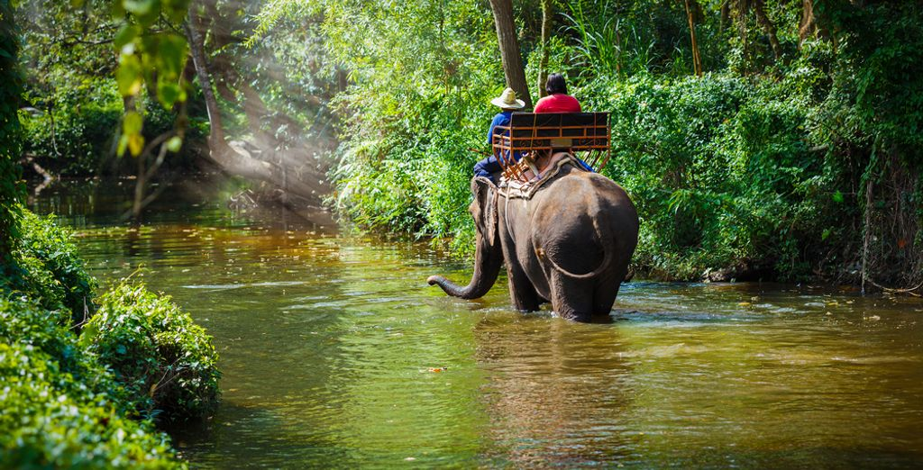 Thailand family activities - tour on Elephants