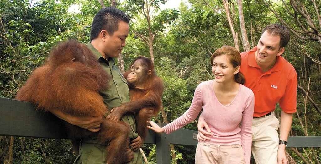 Знакомство с орангутангами все серии