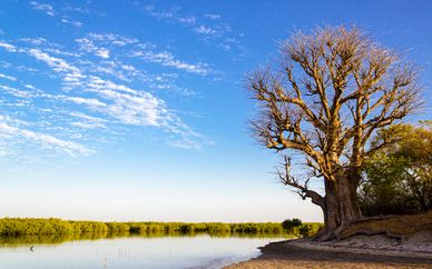 Circuit Les Mangroves du Sénégal