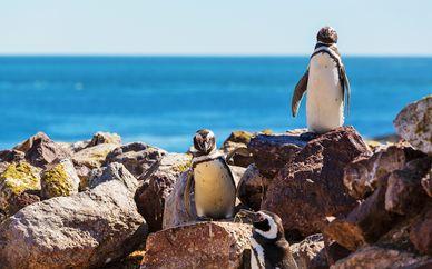 Tour alla scoperta della Patagonia