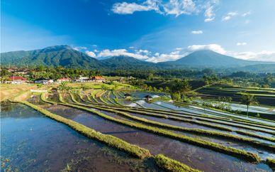 Profound Bali