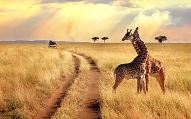 Serengeti Safari & Zanzibar Blue Bay Resort