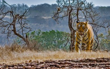 Golden Triangle & Safari at Ranthambore Park