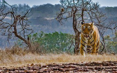 Golden Triangle & Safari at Ranthambore Park