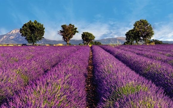 Welkom in ... de Provence!