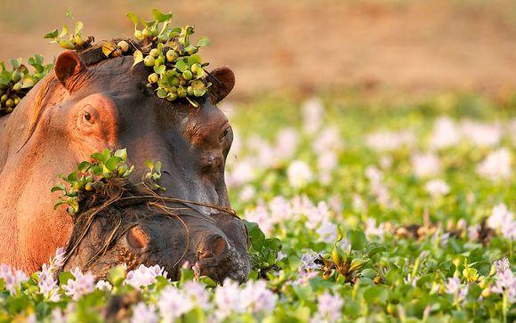 Safari Shimba Hills, Ngutuni & Taita Hills - 3 Tage / 2 Übernachtungen