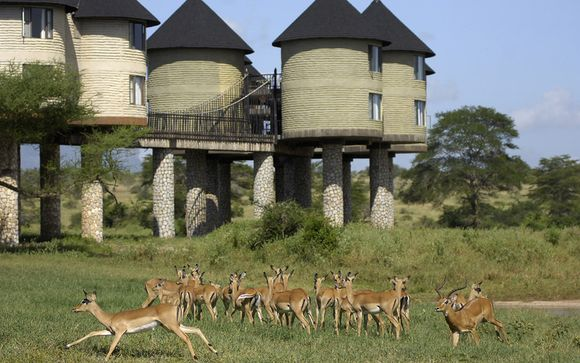 Ihre Safari im Detail