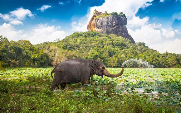 Willkommen in... Sri Lanka!