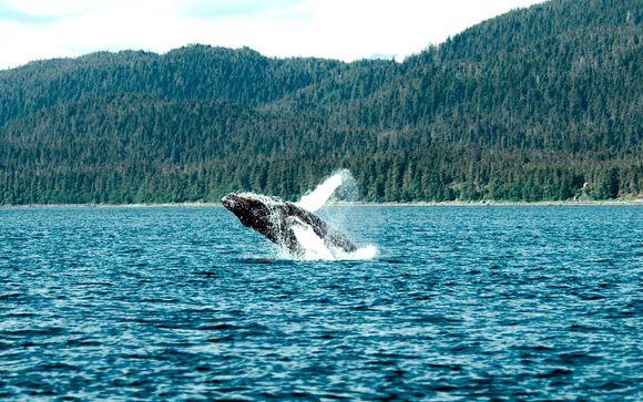 Canadá y ballenas