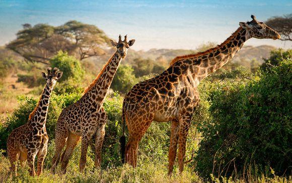 Opción Safari 3 noches