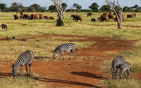 Opción Safari 1 noche