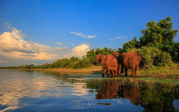 Aventura en la sabana con safaris, tour cultural, ¡y más!