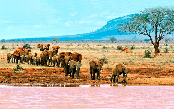Kenia Bamburi - Sarova Whitesands Beach Resort & Spa 5* y safari desde 1.100,00 €