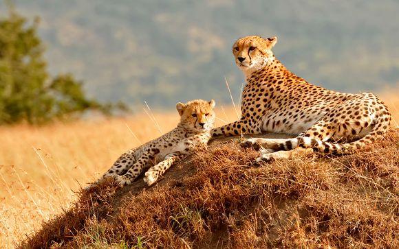 Opción Safari en Masai Mara