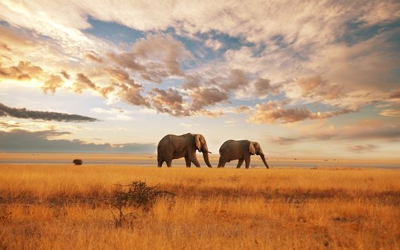 Kenia Nairobi – Safari en Masai Mara y Playa de Diani  desde 2.015,00 ? Nairobi Kenia en Voyage Prive por 2015.00 EUR€