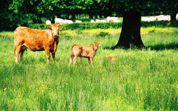 Rendez-vous... en Limousin