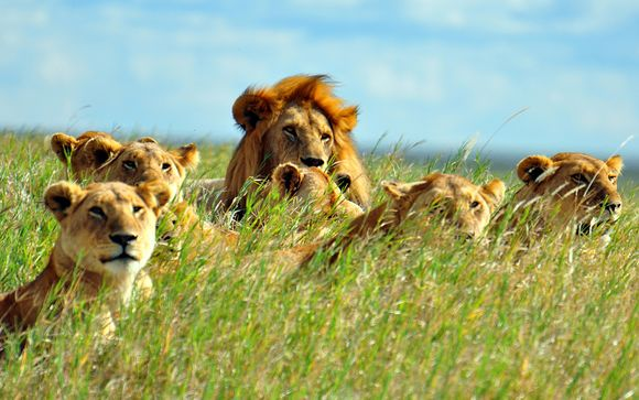 Suivez-nous... En Tanzanie
