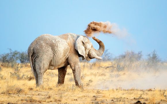 Rendez-vous... en Namibie