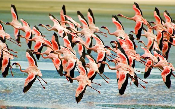 Flamingo rencontres