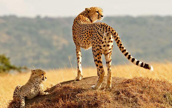 Zoom sur vos safaris