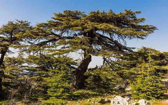 Rendez-vous... au Liban