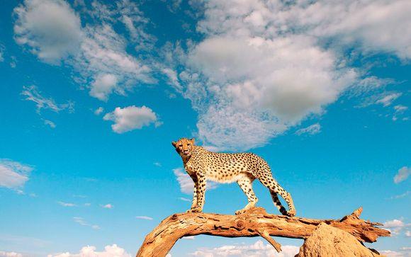 Votre safari en extension