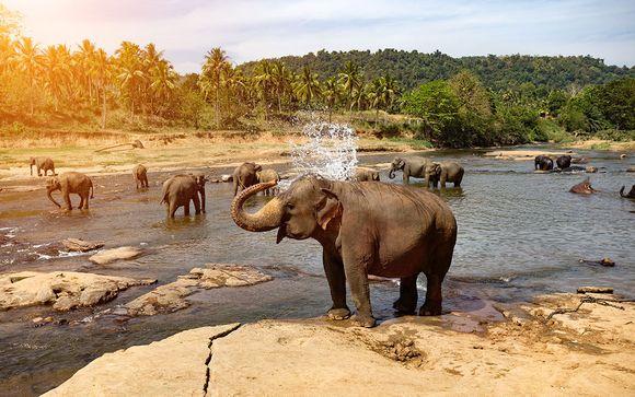Circuit au Sri Lanka et extension � l'H�tel AVANI Kalutara 4*