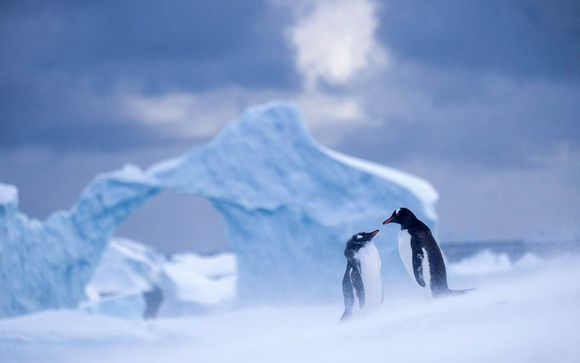 Rendez-vous... en Antarctique