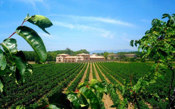 Douceur de vivre au coeur du domaine viticole