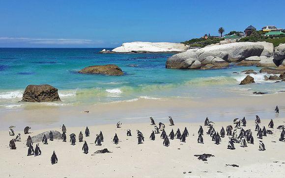 Tour l'essenza del Sudafrica