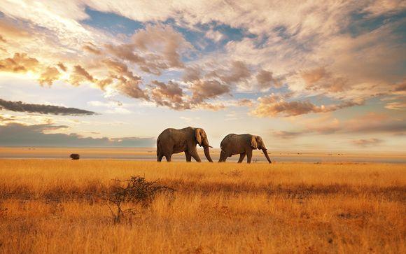 Le meraviglie del Sudafrica in safari