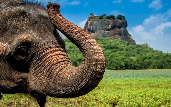 Tour Sri Lanka + Amaya Beach Resort & Spa 5*