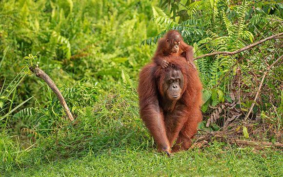Alla scoperta del Borneo Malese