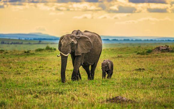 Itinerario di 1 notte - Safari allo Tsavo East National Park