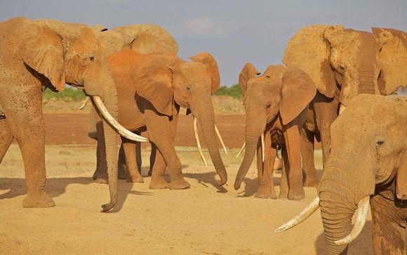 Safari 3 giorni / 2 notti: Parco Nazionale Tsavo Est e Taita Hills Saltlick