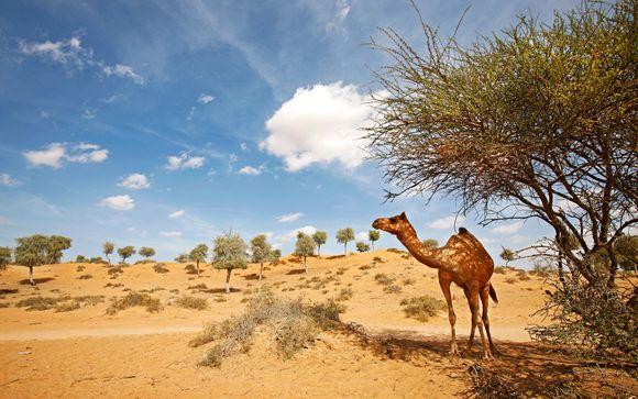 Welkom in... de Verenigde Arabische Emiraten