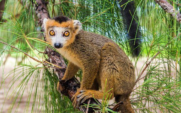 Welkom in... Madagaskar