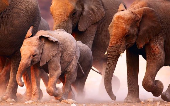 Optionele safari