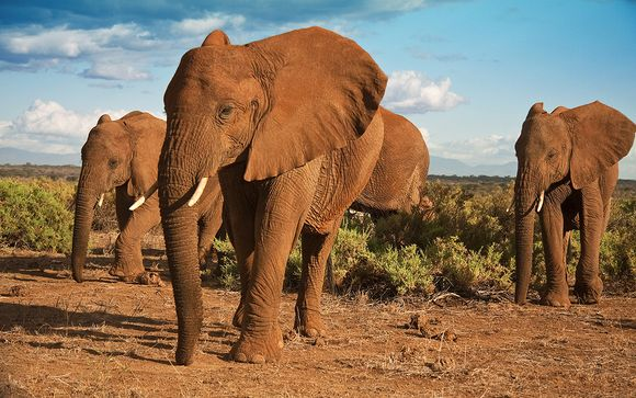 2 nachten op safari in Shimba Hills /Ngutuni / Taita Hills