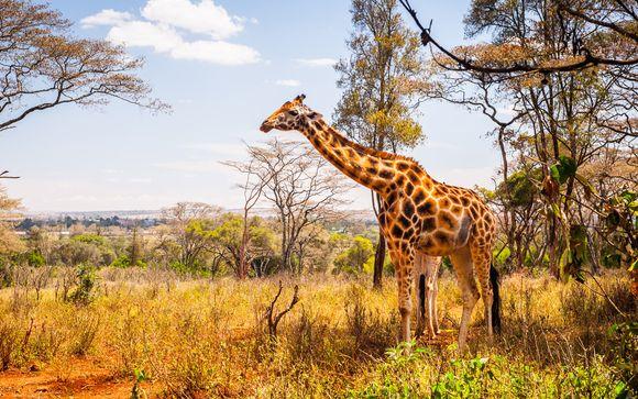 Safari van 2 nachten: Shimba Hills/Ngutuni/Taita Hills