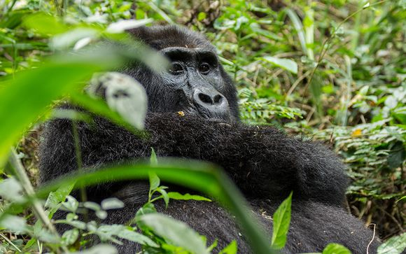 Your Escorted Gorilla Trekking Tour Itinerary