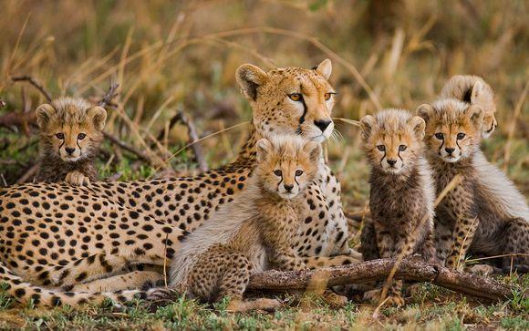 Afrika Pearl & Spa 4* Plus Safaris