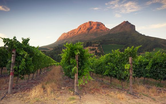 South African Capetown & Winelands Adventure